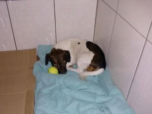 Jovem resgata cachorra abandonada por motorista em Sorocaba (Foto: Arquivo pessoal/ Fernando Negrini)