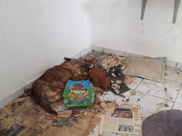 Animais estavam dentro de residência (Foto: RBS TV/Reprodução)