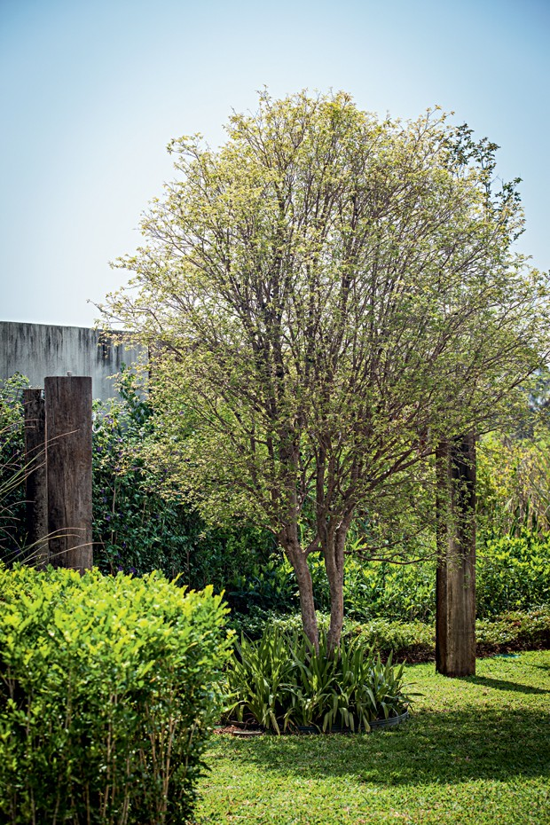 Redário | Ao lado dos dormentes de madeira, jabuticabeira com íris na base. A grama esmeralda não estava vigando e deu lugar à São Carlos, que se adaptou bem ao clima (Foto: Gui Morelli/Divulgação)