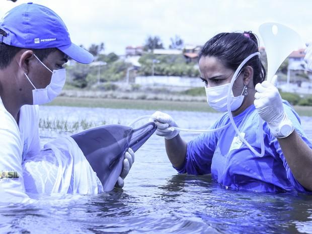 Golfinho é resgatado após encalhar na praia do Japão, no CE; veja fotos