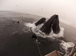 Vídeo flagra mergulhadores sendo quase engolidos por baleias (Foto: Reprodução)