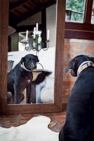 SER OU NÃO SER A cadela Menina na casa onde mora. Contra a agressividade e agitação, ela toma Neuleptil. A gata Mel, de 16 anos. Ela toma ansiolítico (Foto: Raul Spinassé/ EPOCA)
