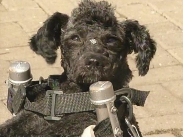 Cadelinha 'Neguinha' foi adotada depois de ser agredida (Foto: Reprodução/TV TEM)