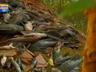 Morte de peixes levanta suspeita de crime ambiental em Santa Rosa, RS