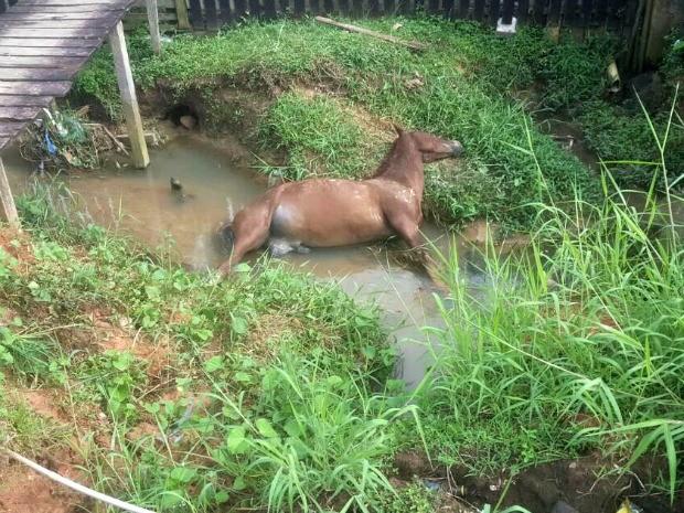Cavalo estaria no meio da rua e teria causado o acidente  (Foto: Anny Barbosa/G1)