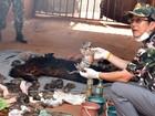 Tailândia acusa 22 pessoas de tráfico de animais no Templo do Tigre