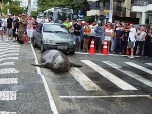 Animal foi atração na Avenida Atlântica (Foto: Guarda Municipal Balneário Camboriú/Divulgação)
