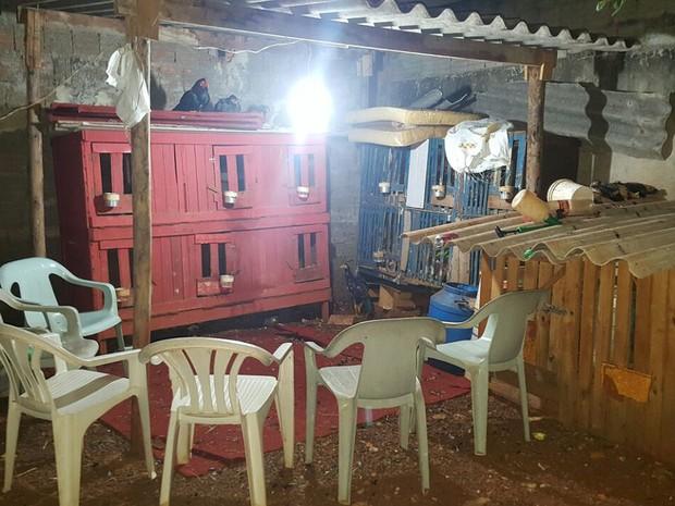 Casa no Jardim Santa Clara, em Sertãozinho, SP, abrigava rinha de galos (Foto: Polícia Militar/Divulgação)