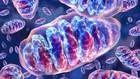 Saiba como funciona o metabolismo energético das células (Reprodução)