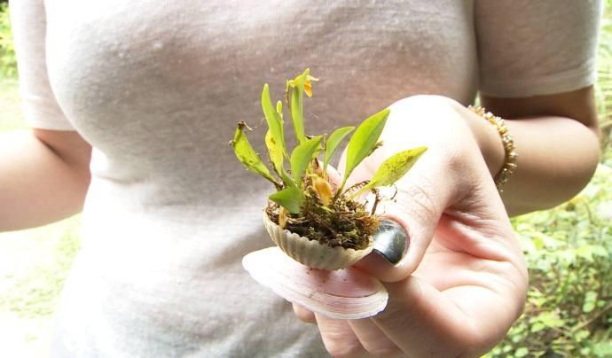 Pequenas flores encantam os turistas que são recebidos pelo orquidófilo Masuji Kayasima (Foto: Reprodução / TV Diário)