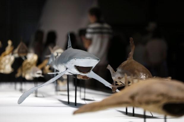 A exposição sobre tubarões foi aberta no última dia 8 de junho (Foto: Valery Hache/AFP)