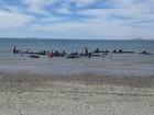 Mais de 20 baleias morrem encalhadas em praia mexicana