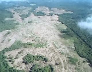 Paraná TV desmatamento (Foto: Reprodução/ RPC TV)