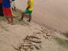 Peixes são encontrados mortos no leito do Rio Doce, em Naque