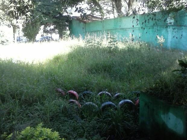 Foco de dengue e mato alto na biblioteca Municipal José Andere, em Ferraz de Vasconcelos (Foto: Juliana Branco/VC no G1)