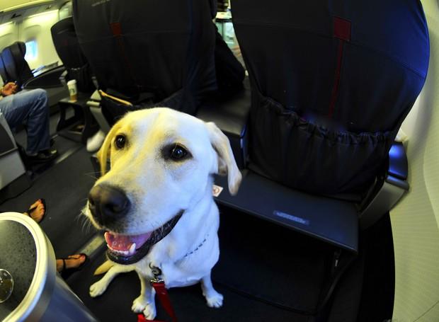 labrador, cachorro, pet, avião, animal, cão, GPS (Foto: ThinkStock)