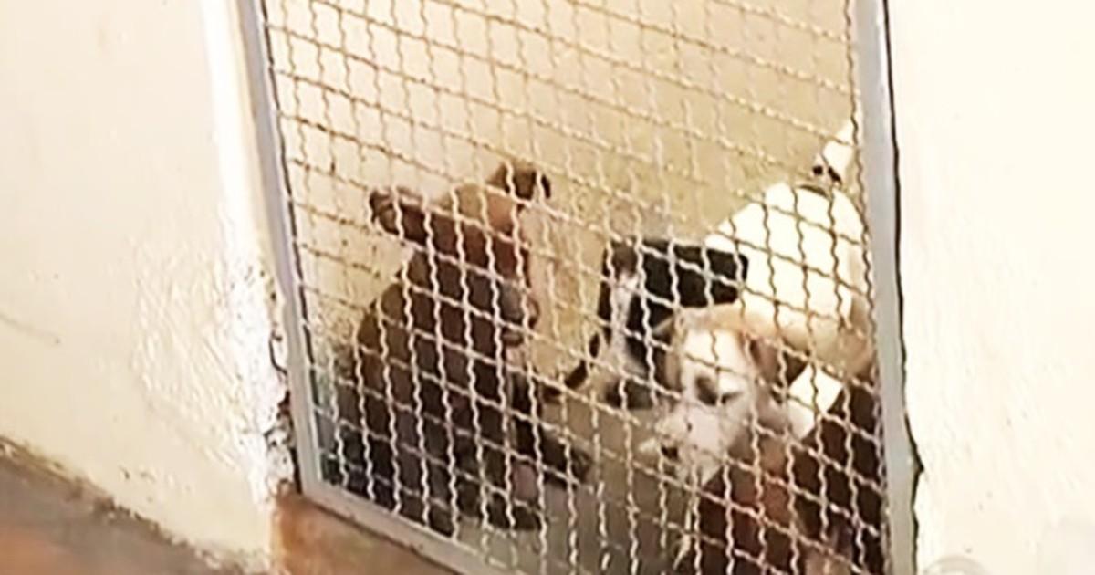 Centro de Zoonoses de Araçatuba dispõe de 50 animais para adoção - Globo.com