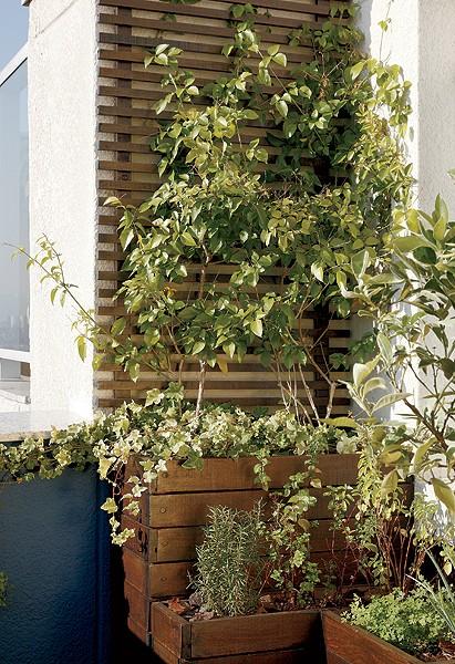 trelica jardim vertical:Jardim pequeno: 10 dicas infalíveis para cuidar – Casa e Jardim