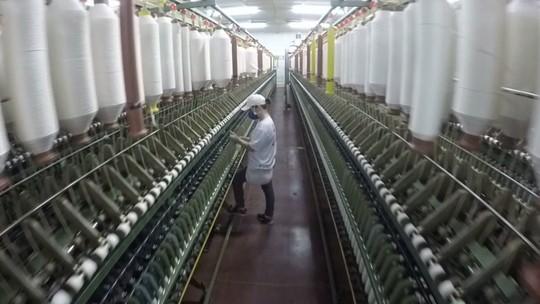 Indústria de algodão ainda movimenta economia do Paraná