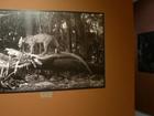 Exposição revela fauna do Parque Nacional do Itatiaia; FOTOS