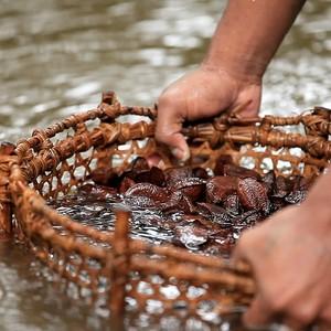 Lavagem de castanhas usadas nos produtos da empresa (Foto: Divulgação)