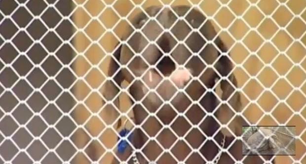Cão foi foi capturado e levado para um canil local (Foto: Reprodução)