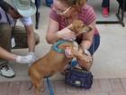 SMS promove vacinação gratuita de animais contra a raiva, em Goiânia