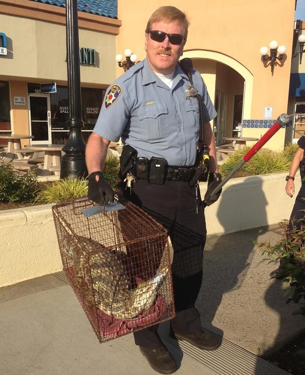 Agente de controle de animais John Bennet carrega crocodilo capturado em shopping em Roseville, na Califórnia (EUA) (Foto: Roseville Police Dept., Laura Valdez/AP)