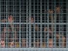 Dez presos morrem nas Filipinas em tentativa de fuga frustrada
