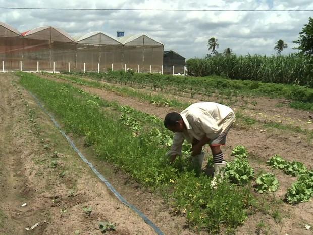 AGRICULTURA FAMILIAR ALAGOAS (Foto: Reprodução/TV Gazeta)