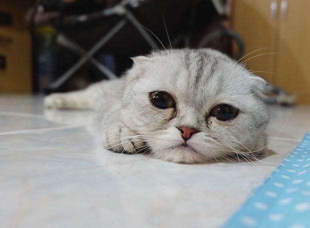 Gato Little P faz sucesso por aparecer triste em fotos (Foto: Reprodução/Instagram/Littlepthecat)