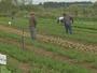 Cooperativa aumenta produção de hortaliças sem agrotóxicos em Itaberá