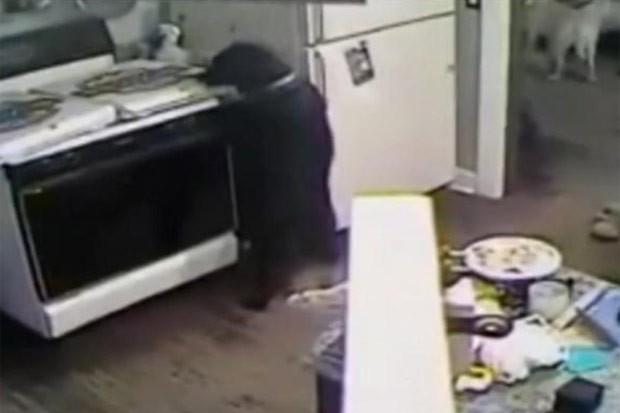 Cão provocou princípio de incêndio em fogão ao 'roubar' pizza (Foto: Reprodução/YouTube/K5102006)