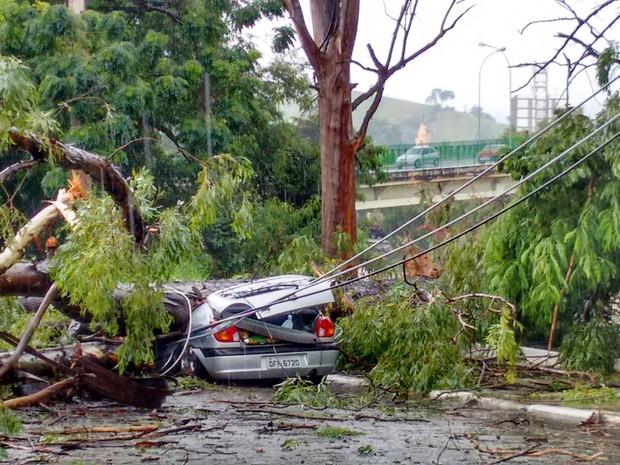 Árvore cai sobre carro em Guaratinguetá (Foto: José Paulo de Castro Fortes/Vanguarda Repórter)