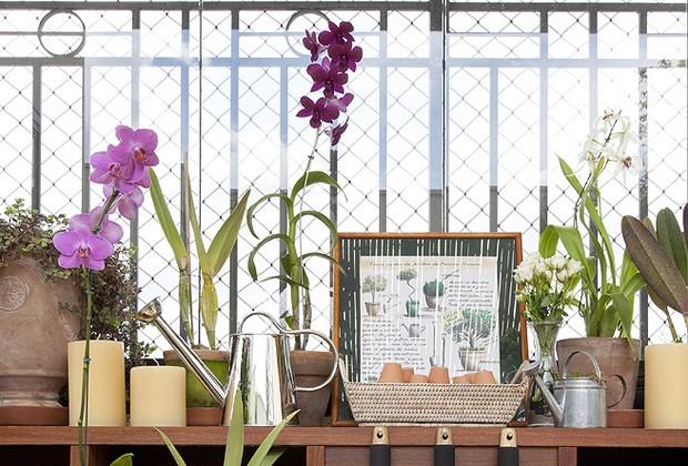 Deixe a planta em um local que receba iluminação natural, mas não a exponha diretamente ao sol (Foto: Casa e Jardim)