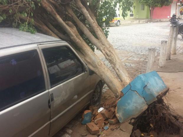 Árvore caiu em cima de carro em Santa Maria da Vitória, oeste baiano (Foto: Edivaldo Braga/ blogbraga)