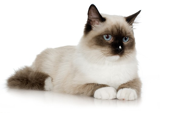 Gato  (Foto: thinkstockphotos)
