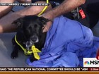 Cadela é resgatada após nadar mais de 14 km na costa da Flórida