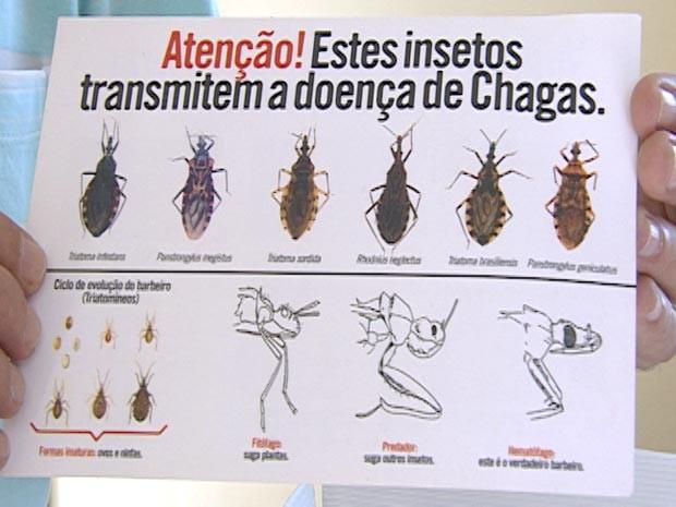 doença de chagas barbeiro zona rural Arcos MG  (Foto: Reprodução/TV Integração)