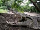 Indonésia pode usar crocodilos para evitar fugas de ilha-prisão