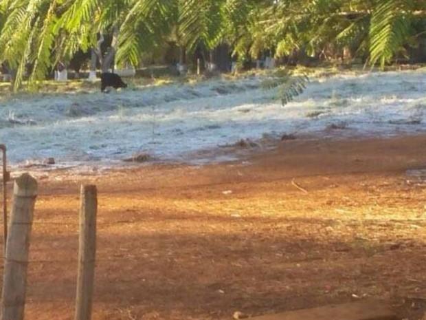 Frio causou geada em Santa Juliana (Foto: Luiz Márcio Torido/Arquivo pessoal)