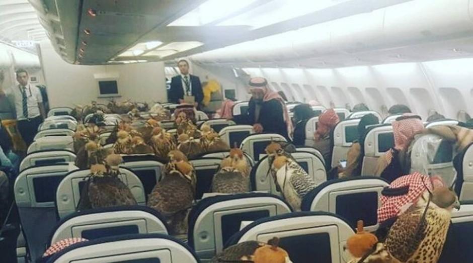 Falcões ocupam assentos em voo (Foto: Reprodução )