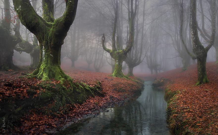 Fotógrafos e florestas (Foto: Javier de La Torre / Divulgação)