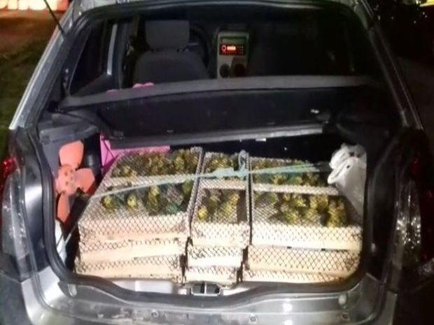 Aves eram transportadas dentro de caixotes no porta-malas do carro (Foto: PRF/Divulgação)