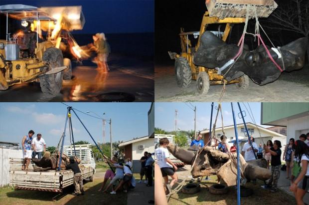 Os pesquisadores transportam os ossos da praia para o campus da Unesp (Foto: Divulgação/Unesp)