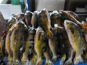 A pesca artesanal movimenta a maior quantidade de peixes dese,barcados na Feira do Pescado (Foto: Glebson Viana/G1)