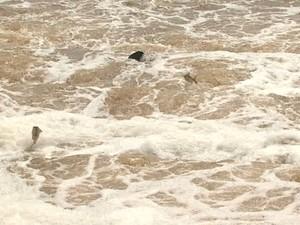 Peixes voltam à Cachoeira de Emas, no Rio Mogi Guaçu (Foto: Wilson Aiello/EPTV)