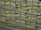 Incentivar importação pode não baratear o feijão, dizem especialistas