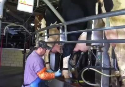 Rabobank vê maior consolidação do setor de lácteos no Brasil - Globo Rural