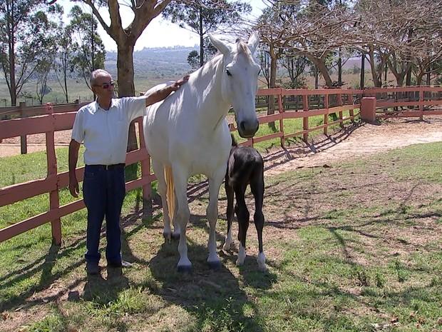 Haras em Pirapora do Bom Jesus (SP) tem 40 cavalos  (Foto: Reprodução/ TV TEM)